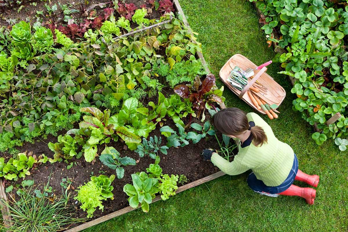 outdoor-veggies